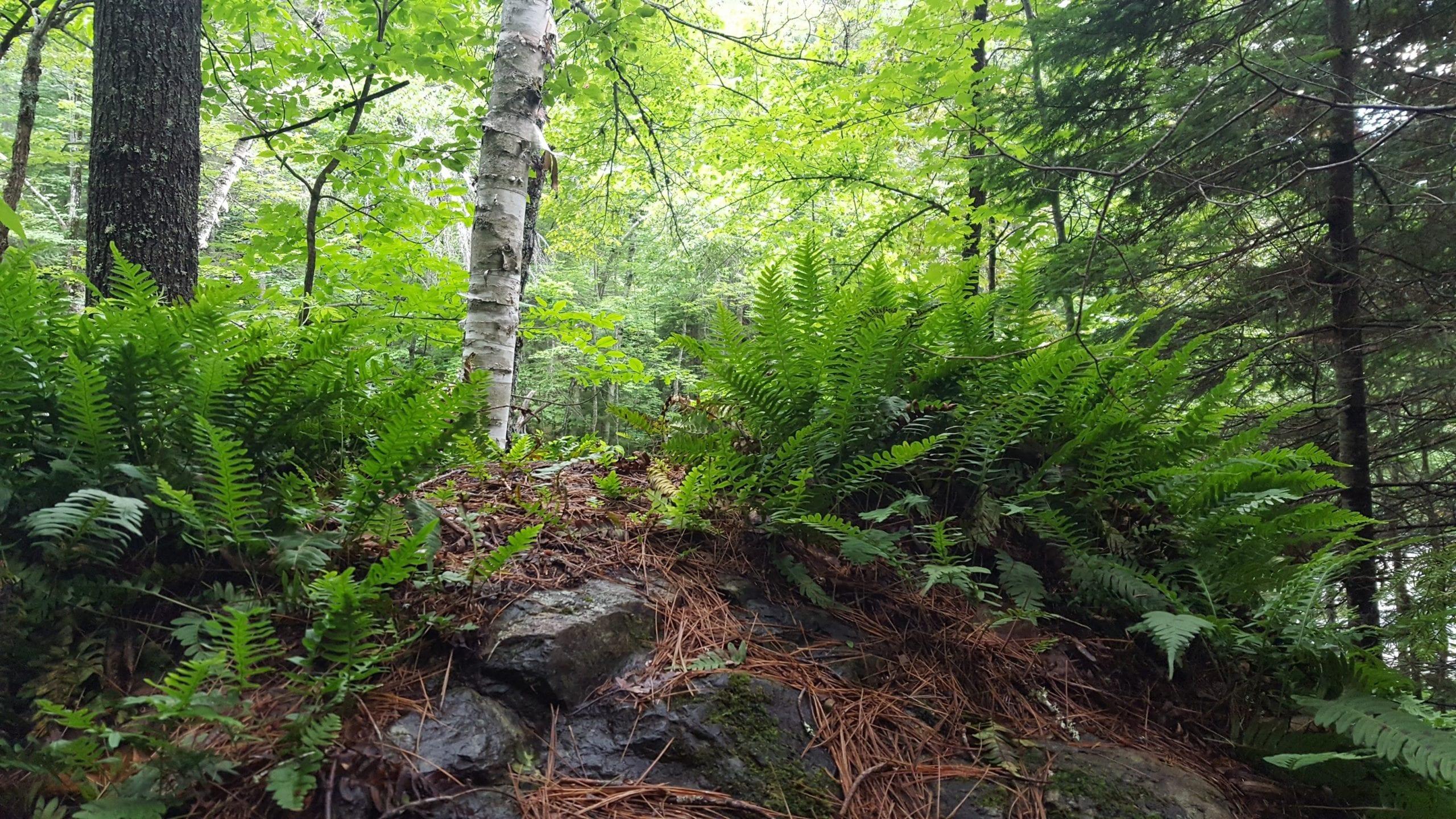 Shin Brook Falls trail.