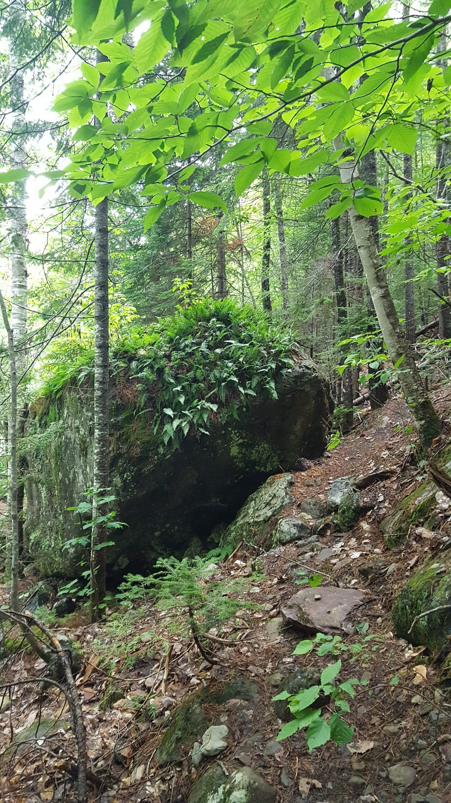 Shin Falls hiking trail.