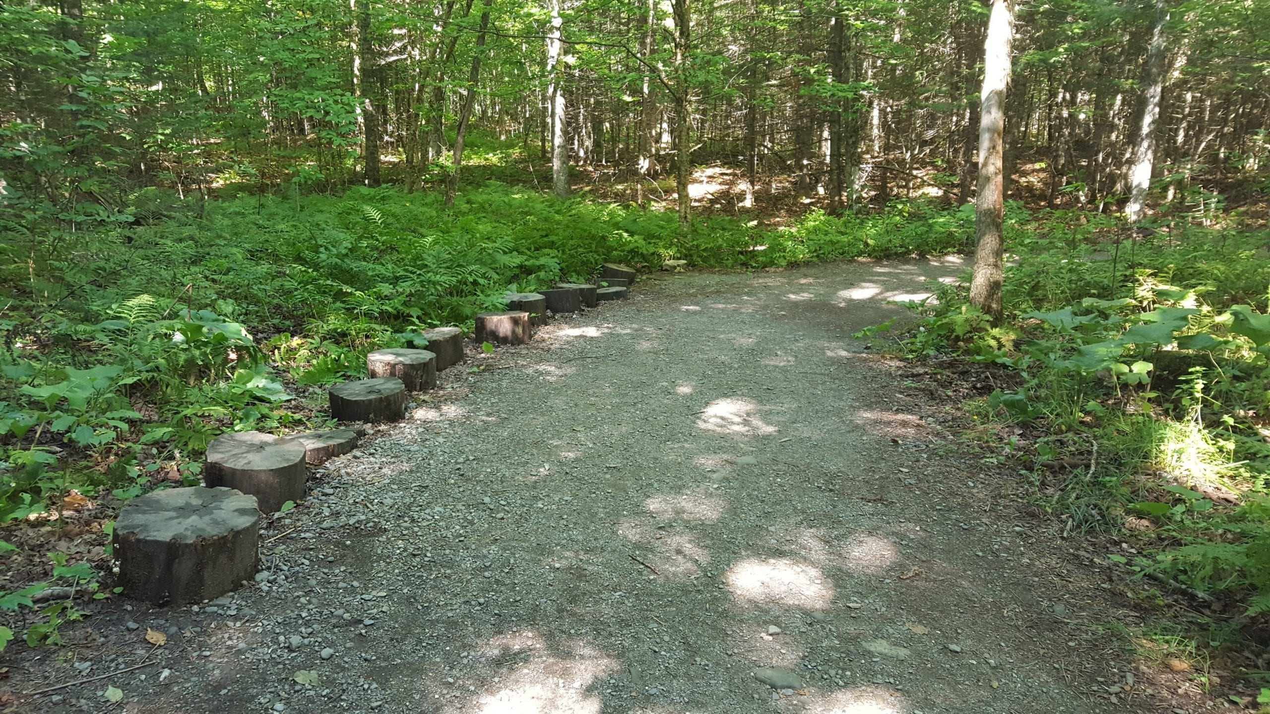 This is what a majority of the trail looks like on the way to Moxie Falls. Wide, flat, and well-maintained.